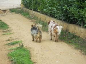 Nous, on s'en va ! On laisse les chats ! Ciao les amis ! A bientot ! img_0525-300x225